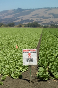 Pesticide Warning in Lettuce Field